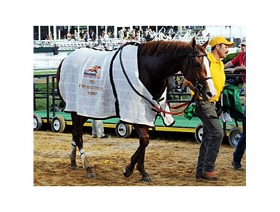 Shackleford after winning the Preakness Stakes.
