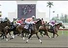 "Horses race past the tote board during the first race at Gulfstream Park Monday. The race was declared a ""no contest."""