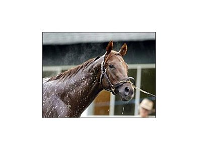 Smarty Jones looks toward the hordes of photographers, reporters, and television cameras covering his morning bath at Belmont Race Track.