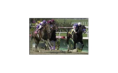 During, right, is chased by Ten Most Wanted, far left, and Eye of the Tiger during the Swaps Stakes.