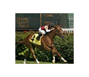 Quite a Bride gets home in turf course record time in Early Times Mint Julep Handicap, Saturday at  Churchill Downs.