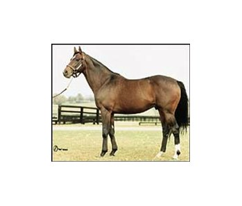 Theatrical, leading turf sire in North America.
