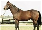Theatrical Takes Command on 2001 Turf Sire List