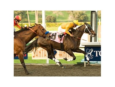 "Kinsale King drives to the finish in the Palos Verdes.<br><a target=""blank"" href=""http://www.bloodhorse.com/horse-racing/photo-store?ref=http%3A%2F%2Fpictopia.com%2Fperl%2Fgal%3Fprovider_id%3D368%26ptp_photo_id%3D8758153%26ref%3Dstory"">Order This Photo</a>"