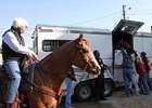 As Bob Baffert, aboard his pony, looks on, trainer Chip Woolley loads Derby winner Mine That Bird onto his van for the trip of Pimlico.