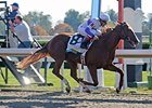 "Square Eddie is one of 2 graded stakes winners in the Lexington.<br><a target=""blank"" href=""http://www.bloodhorse.com/horse-racing/photo-store?ref=http%3A%2F%2Fpictopia.com%2Fperl%2Fgal%3Fprovider_id%3D368%26ptp_photo_id%3D7997606%26ref%3Dstory"">Order This Photo</a>"