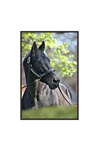 Seattle Slew, at Hill 'n' Dale Farm in April.