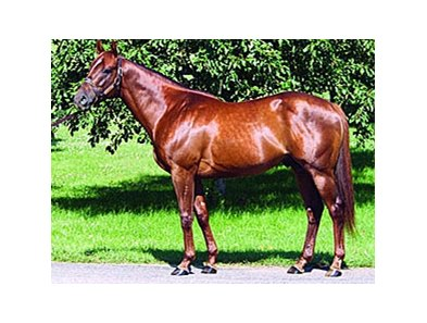 First Samuari, sire of the OBS April sale-topper.