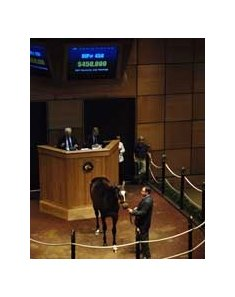 Hip #450, a Malibu Moon colt, brings $450,000 on the last day of the Fasig-Tipton Kentucky July Yearling Sale.