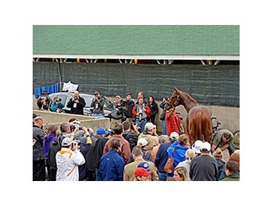 Dortmund at Bob Baffert's barn.