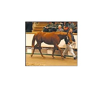 Machiavellian colt, brought top price at Tattersalls December yearling sale.