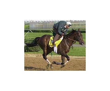 Anees, the champion 2-year-old male of 1999 shown here during training hours at Churchill Downs, has been retired.<br>