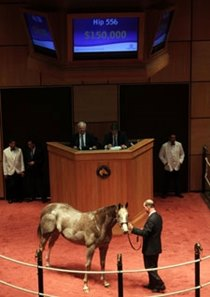 Fasig-Tipton October Sale
