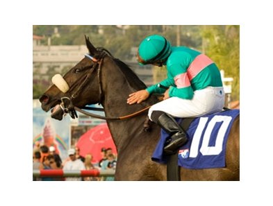 "Zenyatta<br><a target=""blank"" href=""http://www.bloodhorse.com/horse-racing/photo-store?ref=http%3A%2F%2Fpictopia.com%2Fperl%2Fgal%3Fprovider_id%3D368%26ptp_photo_id%3D8394818%26ref%3Dstory"">Order This Photo</a>"