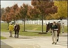 Keeneland November sale offerings are inspected before being sold.