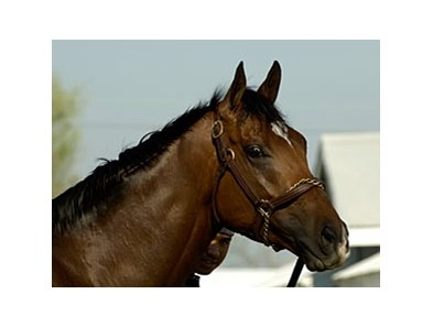 "Barbaro<br><a target=""blank"" href=""http://www.bloodhorse.com/horse-racing/photo-store?ref=http%3A%2F%2Fpictopia.com%2Fperl%2Fgal%3Fprovider_id%3D368%26ptp_photo_id%3D4597718%26ref%3Dstory"">Order This Photo</a>"