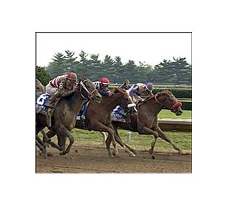 Runway Model, shown winning the 2004 Alcibiades, tops field for Black-Eyed Susan.