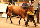 A colt from the first crop of multiple group I winner Paco Boy sold for 52,000 guineas ($87,423).