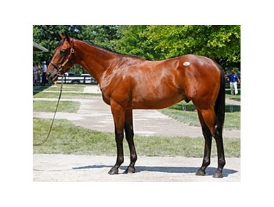 Hip#52 colt; Street Sense - Hishikatsu Ballado by Saint Ballado, brought $250,000 early in the afternoon of July 13 of the Fasig-Tipton Kentucky July select yearling sale.