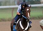"Rachel Alexandra works out at Saratoga as she prepares for her next start in the Haskell Invitational.<br><a target=""blank"" href=""http://www.bloodhorse.com/horse-racing/photo-store?ref=http%3A%2F%2Fpictopia.com%2Fperl%2Fgal%3Fprovider_id%3D368%26ptp_photo_id%3D8366447%26ref%3Dstory"">Order This Photo.</a>"