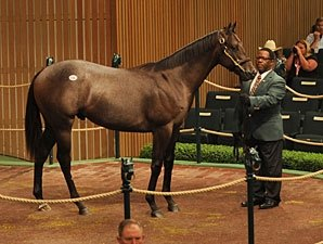 Street Cry Colt Sold for $1.2 Million