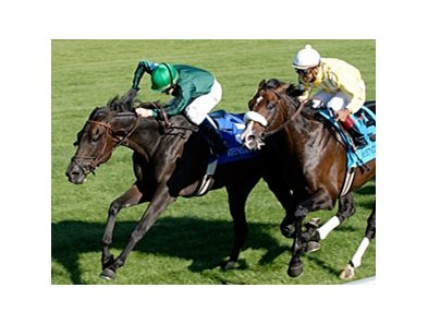 "Transduction Gold, shown winning the 2007 Sycamore, is back to try again in 2008.<br><a target=""blank"" href=""http://www.bloodhorse.com/horse-racing/photo-store?ref=http%3A%2F%2Fpictopia.com%2Fperl%2Fgal%3Fprovider_id%3D368%26ptp_photo_id%3D2435812%26ref%3Dstory"">Order This Photo</a>"