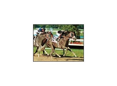 Macho Uno, shown winning the 2001 Pennsylvania Derby, is being aimed toward the Breeders' Cup Classic.