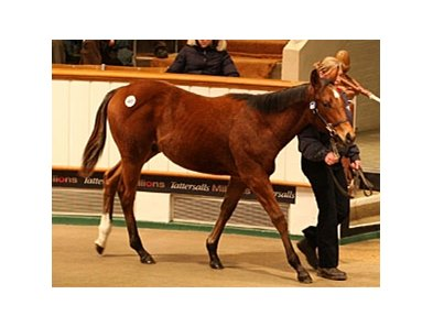 Colt, Sakhee's Secret - Malelane, brought 42,000 guineas to top the first day of the Tattersalls December Foal Sale.