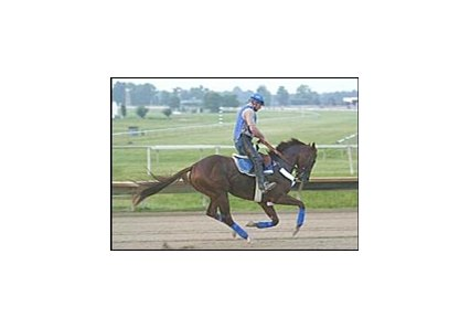Smarty Jones, with exercise rider Pete Van Trump aboard, on the track at Philadelphia Park Monday.