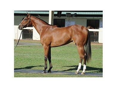 Hip 916, filly; Corinthian - Glacken's Mark by Smoke Glacken brought $320,000 to top the third session of the Ocala Breeders' Sales Company's 2011 Spring Sale of 2-Year-Olds in Training.