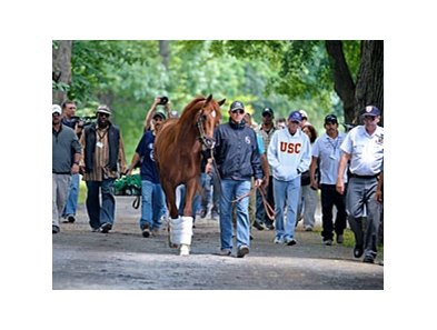 "I'll Have Another was the last to arrive at the Belmont Stakes barn.<br><a target=""blank"" href=""http://photos.bloodhorse.com/TripleCrown/2012-Triple-Crown/Belmont-Stakes-144/23333063_3WZKbw#!i=1890112655&k=snsBNm5"">Order This Photo</a>"