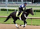 Bolo