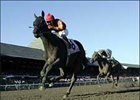 Midnight Lute comes into the Breeders' Cup Sprint (gr. 1) off a huge win in the Forego (gr. 1).