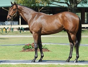 OBS March Sale Ends With $925,000 Bang