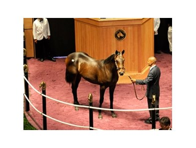 Hip 228, a Birdstone colt that sold for $400,000, was today's sale topper.