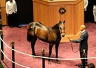 Birdstone Colt Sold for $400,000 at FTK Sale