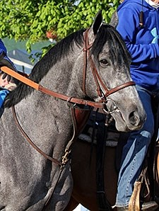 El Kabeir at Churchill Downs 4.29.15.