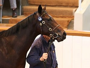 Tattersalls Book 2 Ends With Record Gross