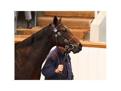 Lot 1156; colt, Exceed and Excel - Temple of Thebes by Bahri brought 260,000 guineas to top the Book 2 portion of the Tattersalls October yearling sale.