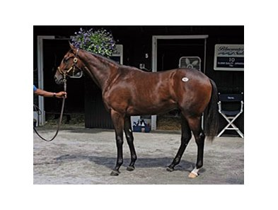 A robust bay colt by A.P. Indy was the $1.2 million sale topper.