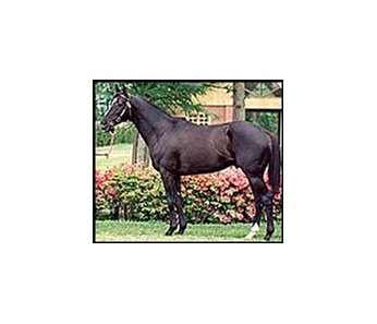 Kentucky Derby winner and leading Japanese sire Sunday Silence.