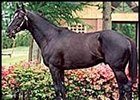 Kentucky Derby winner and leading Japanese stallion Sunday Silence.
