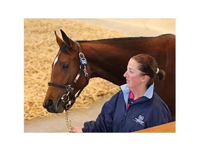 Lot 1343, filly, Dutch Art - Miss Otis by Danetime, brought 120,000 guineas Oct. 13 to top the third session of the Book Two portion of the Tattersalls October yearling sale.