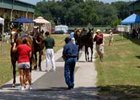 Buyers and sellers mingle in advance of OBS yearling sale.