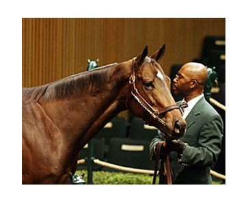 The top-selling horse Wednesday was a stakes-winning filly named Stylish Wildcat, who brought $800,000.