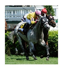 "Silver Timber sets a course record in the Churchill Downs Turf Sprint.<br><a target=""blank"" href=""http://www.bloodhorse.com/horse-racing/photo-store?ref=http%3A%2F%2Fpictopia.com%2Fperl%2Fgal%3Fprovider_id%3D368%26ptp_photo_id%3D8937231%26ref%3Dstory"">Order This Photo</a>"