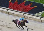 American Pharoah running in the Preakness Stakes.