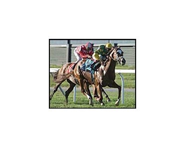 Dogwood Stable's Finality has won four of five starts on turf.