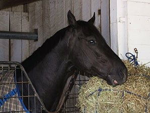 'Decisive' 1st Derby Contender at Churchill