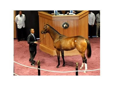 Hip No. 250, a Medaglia d'Oro bay filly that sold for $425,000 this morning at the F-T Sale.